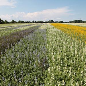 Start des Versuchsanbaus der eiweißhaltigen Futterpflanzen Soja und Lupine in Klein Süstedt