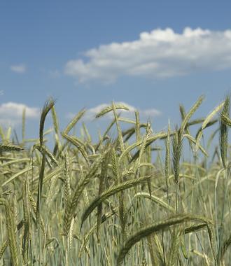 Landbauforschung
