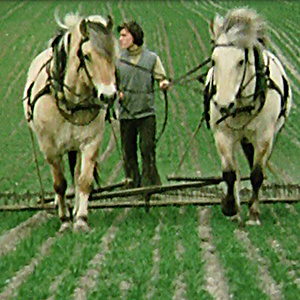 Umstellung des Hofes Stütensen auf biologisch-dynamische Landwirtschaft